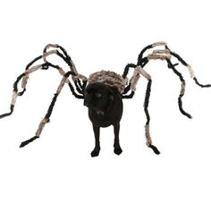 Funniest Halloween Spider Dog Costume DIY Large Spider Prop Homemade Dog Treats To Hand Out To Dogs On Halloween funny Dog Spider Costume, Spider Dog, Tumeric For Dogs, Diy Dog Costumes, Halloween Costumes, Mascot Costumes, Large Spiders, Halloween Spider Decorations, Dog Halloween