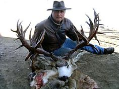 biggest mule deer