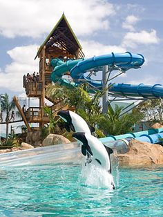 SeaWorld Orlando's water park, Aquatica  Thinking about celebrating our 37th Wedding here in Sept. it's one mile from our hotel for the Hardware Convention. Still young at heart right!