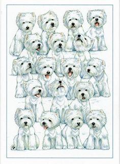 """Sit! Stay!"" Westie Blank Card with art by Borgo"