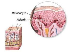 Melanin is the human skin pigment which is responsible for coloration of eyes and the hair. Color and melanin amount are directly proportional. Tanning is a Stop Grey Hair, Gray Hair, Safe Tanning, Tanning Tips, Kojic Acid, Scar Treatment, Cancer Treatment, Vitamins For Skin, E 10