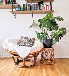 Hur stor är inte min Monstera nu! Green Plants, Hanging Chair, Living Room, Photography, Furniture, Instagram, Home Decor, Photograph, Decoration Home
