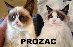 #grumpycat #humor #funny #lol #caption