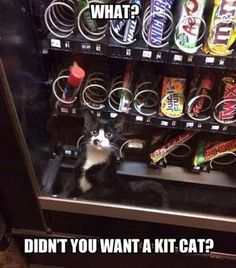 Check out the funniest memes, funny GIFs and hilarious videos that make you laugh out loud in public! Funny Animal Pictures, Funny Animals, Cute Animals, Sneaky Animals, Funniest Pictures, Crazy Cat Lady, Crazy Cats, Funny Cute, Hilarious