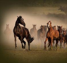 Beautiful Horses by Fotojazz - AmO Images - AmO Images