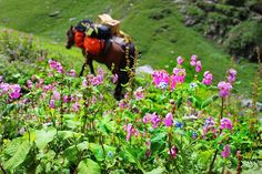 This is day 2 of beautiful Hampta pass where the magical valley of flowers welcome you and the vibrant flowers please all your senses.  #adventure #adventureanywhere #backpack #backpacking #trekking #hike #flowers #flowerstagram #wilderness #wanderlust #offbeatravel #globetrekker #livingontheedge #passionpassport #traveldiaries #travelphotography #mountaineering #instatravel #explorer #photooftheday #himalayas #indiatravelgram #bikatadventures #challenges #summit #pass #himachal #hamptapass…