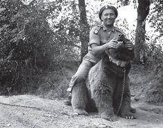 Katy Carr - Wojtek Song about Wojtek, The Bear That Went To War Wojtek Bear, Poland Ww2, Poland History, George Santayana, Animal Magic, Photo B, My Heritage, North Africa, Retro