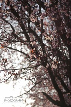 Nature Photograph Flowering Branches Tree Spring by SweetEventide