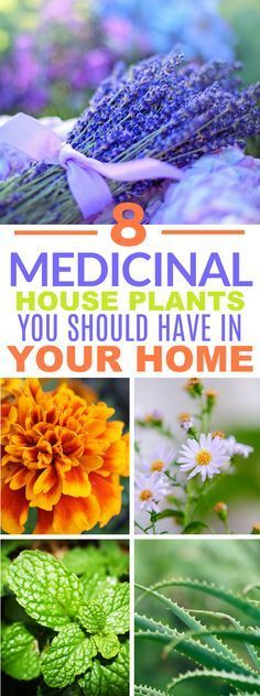 Medicinal House Plants That'll Bring Life to Your Kitchen These 8 Medicinal Houseplants Are Great To Cure Ailments Naturally.These 8 Medicinal Houseplants Are Great To Cure Ailments Naturally. Backyard Play Spaces, Ponds Backyard, Organic Gardening, Gardening Tips, Indoor Gardening, Gardening Supplies, Gardening Courses, Backyard Lighting, Medicinal Plants