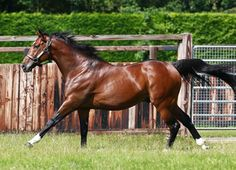 Frankel (GB) (Galileo {Ire}) could reach another milestone in his stallion career this week when he is represented by his first runner in Victoria. Wednesday will see New Horizons (Jpn) make his debut for the …
