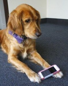 Top Ten Smartphone Apps for Dog Owners