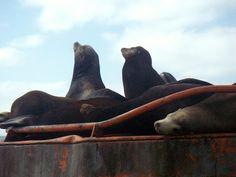 Sea Lions in Laguna Ojo de Liebre (Scammon's Lagoon), Guerrero Negro, Baja California Sur, Mexico. For #WildlifeWednesday http://bajabybus.com