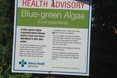 #Blue-green algae warning issued at Alberta's Pine Coulee Reservoir - Globalnews.ca: Globalnews.ca Blue-green algae warning issued at…