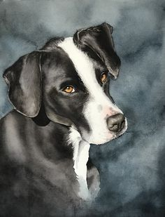 inch watercolor dog portrait by jan riggins dog art dog paintings, . Watercolor Canvas, Watercolor Portraits, Watercolor Animals, Watercolour Painting, Animal Paintings, Animal Drawings, Animal Activities, Illustration Artists, Dog Portraits