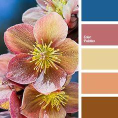 Blue Color Palettes, bright blue, brown, burgundy-pink, color solution for home, deep blue, Orange Color Palettes, pale yellow, pink, red-pink, shades of warm brown, warm brown.