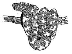 #linocut #snake #boa #blackandwhite #contemporaryart #contemporary #artwork #graphic #linoprint #print #art #animals Linoprint, Contemporary Artwork, Tatoos, Snake, Animals, Ideas, Animales, Animaux, Contemporary Art