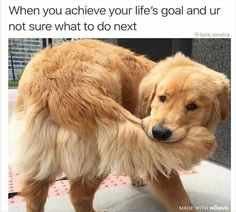 funny dogs memes 29 Funny Animal Pictures Of The Day - Funny Animals - Daily LOL Pics - 29 Funny Animal Pictures Of The Day - Funny Animals - Daily LOL Pics Cat And Dog Memes, Funny Dog Memes, Funny Animal Memes, Cute Funny Animals, Funny Animal Pictures, Funny Cute, Dog Pictures, Funny Dogs, Mom Funny