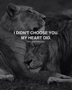 ❤️❤️ My heart did choose you! Relationship Quotes For Him, Relationships Love, Lion Couple, Lion Photography, Lion Quotes, Lion Love, Quotes For Book Lovers, Lion Pictures, Queen Quotes