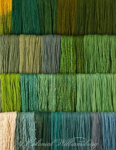 Studio photography of various colors of yarn dyed at the Weaver's shop.  Shot for book by Max Hamerick on dyeing textiles; Greens; Top three rows are Fustic with Indigo;  The Bottom row is Annatto Seed with Indigo Photo by Barbara Temple Lombardi
