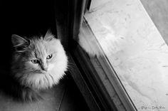 riflesso di gatto