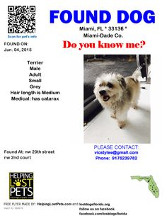 Found Dog - Terrier - Miami, FL, United States
