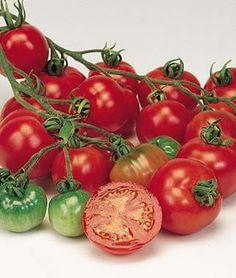 20 graines//seeds//semillas tomate//tomato Marianna/'s Hawaian Pineapple