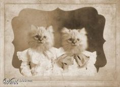 .What a loverly couple of felines