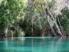 Authentic Florida - Eight Florida Springs for Summer Fun