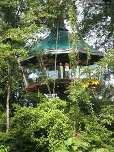 Tree House Manzanillo Costa Rica | Glamping Manzanillo Forest Costa Rica | Tree house, Costa Rica