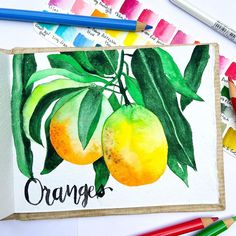 Since they didn't exactly look like oranges, I had to handletter 'oranges' 😀 . Botanical Drawings, Botanical Art, Watercolour Painting, Watercolours, Watercolor Beginner, Floral Drawing, Hand Lettering, Channel, Paper