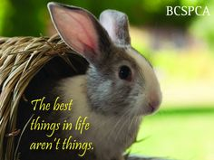Shop BC SPCA for all the latest compassion fashion. All proceeds go to the BC SPCA Priority Needs Fund, to support life saving work around the province. Rabbits, Holiday Cards, Life Is Good, Store, Animals, Animales, Animaux, Rabbit, Life Is Beautiful