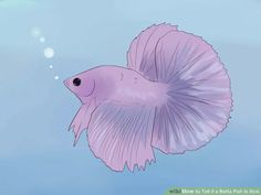 Image titled Tell if a Betta Fish Is Sick Step 1 Fish Activities, Craft Activities For Kids, Colorful Fish, Tropical Fish, Betta Fish Care, Discus Fish, Beta Fish, African Cichlids, Beautiful Fish