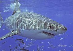 Shark Week: 7 Incredible Shark Photos