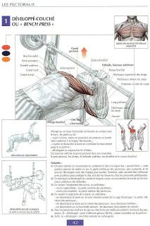 guide de musculation: BEST chest workouts
