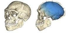 New Fossils Push Known Human History Back 100K Years