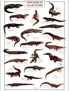 crocodilos - Pesquisa Google