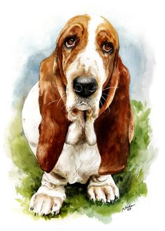 Basset Hound, 10x15 watercolor, $250
