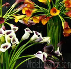 Mini Calla Lilies | Buy Wholesale Mini Calla Lilies Wedding Flowers