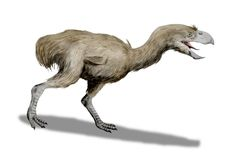 Paraphysornis BW - Paraphysornis - Wikipedia, the free encyclopedia