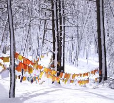 Bright flags with messages of gratefulness in the Weston woods. Reminds me of The Gates in Central Park. Central Park, Gates, Flags, Grateful, Woods, Snow, Bright, Messages, Outdoor