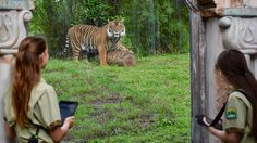 I hope you had a chance to see Disney's Animal Kingdom: Alive with Magic, a television special that premiered on Animal Planet last week and is available now on demand at animalplanet.com. We love telling the stories of our care and conservation