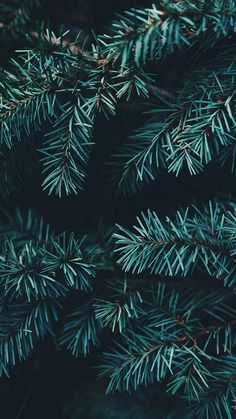 Enjoy 35 Christmas iPhone Wallpapers by Preppy Wallpaper Wallpapper Iphone, Wallpaper Collection, Amoled Wallpapers, Evergreen Trees, Christmas Wallpaper, Christmas Background, Image Hd, New Wall, Christmas Pictures