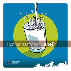 Marci fejlesztő és kreatív oldala: Honnan származik a tej