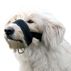 Alfie Pet by Petoga Couture - Jaimy Adjustable Quick Fit Nylon Muzzle - Color: Black ** Want additional info? Click on the image. (This is an affiliate link and I receive a commission for the sales)