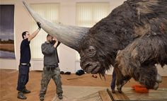 "New research just published suggests that the ""Siberian Unicorn,"" an ancient species of rhino, existed much longer than previously believed and walked the earth at the same time as modern humans. Dinosaur Fossils, Extinct Animals, Prehistoric Creatures, Rhinoceros, Fauna, Whippet, Nature Animals, Animal Kingdom, Mammals"