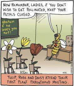 flower humor - keep your petals closed Funny Cartoons, Funny Comics, Funny Jokes, Hilarious, Adult Cartoons, Cartoon Humor, Hubert Reeves, Science Jokes, Chemistry Jokes
