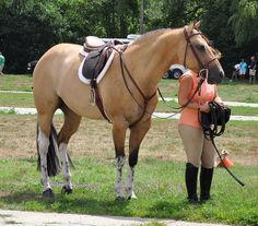 Really interesting minimally expressed white on a buckskin, Weird genetics going on there.