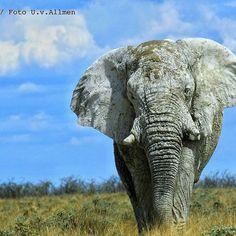 Majestic elephant ..!!.Credit : @aelmy68 . #elephant #elephants #elephantlove