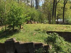 Tijgers burgers zoo