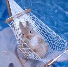 A bunny chilling in a hammock!